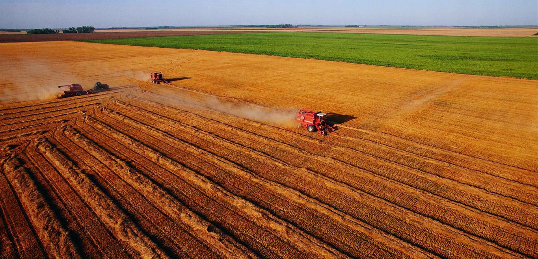 Agricoltura: dalla Regione Lazio 780 milioni per startup e ...